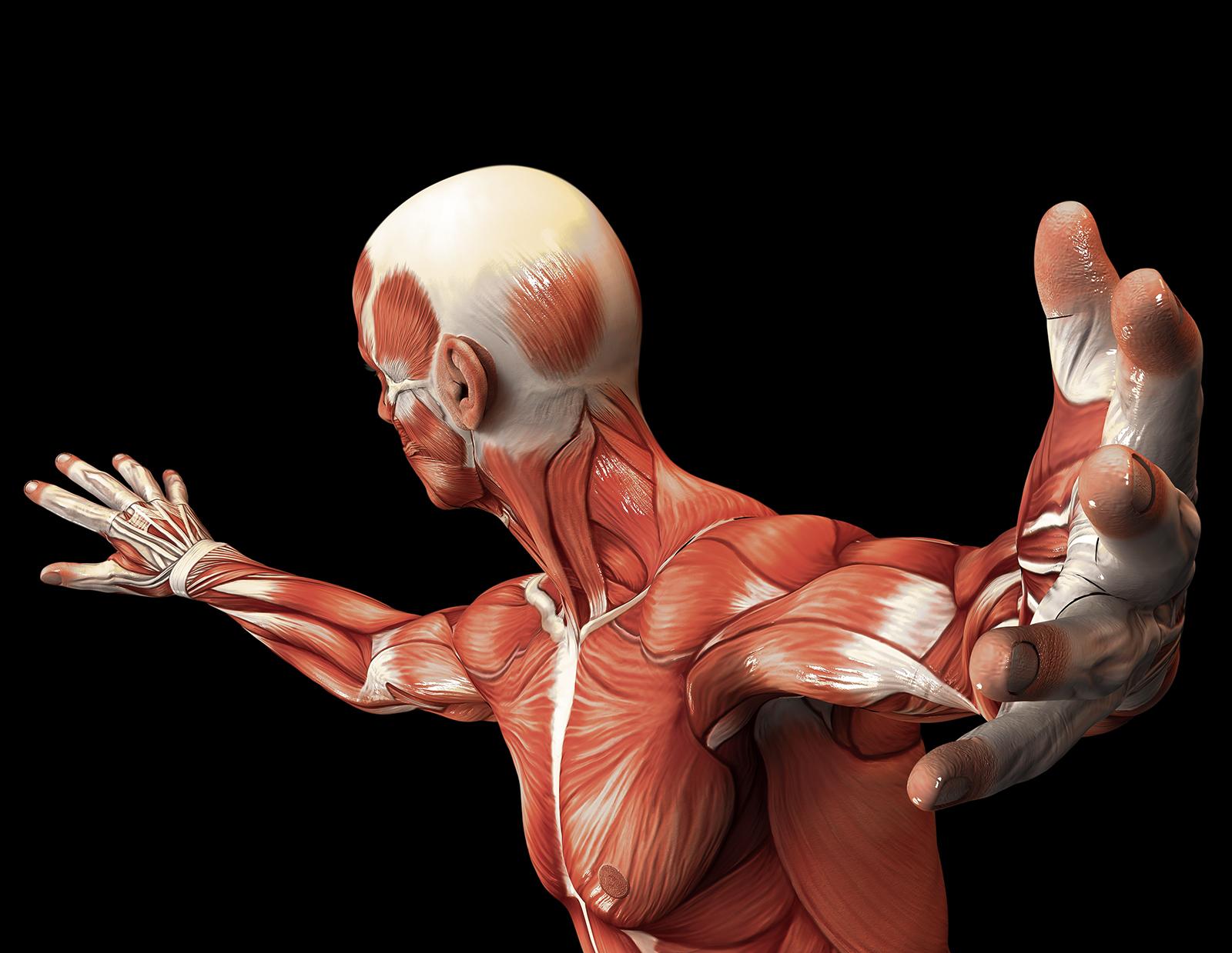 Body - Anatomy